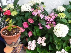 色とりどりの花と鉢